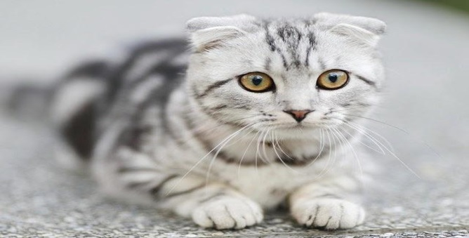 a beautiful white cat with yellow eyes