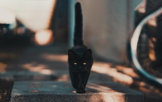 a black cat with a raised tail, walking on a board